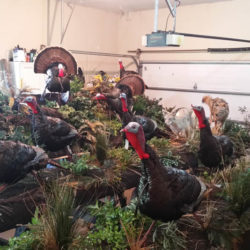 Mehlhop Four Season Taxidermy (35)