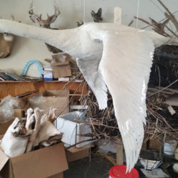 Mehlhop Four Season Taxidermy (77)