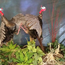 Mehlhop Four Season Taxidermy (78)