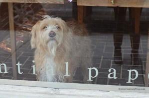 Scriptura shop dog