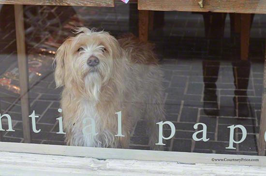 Scriptura shop dog on www.CourtneyPrice.com