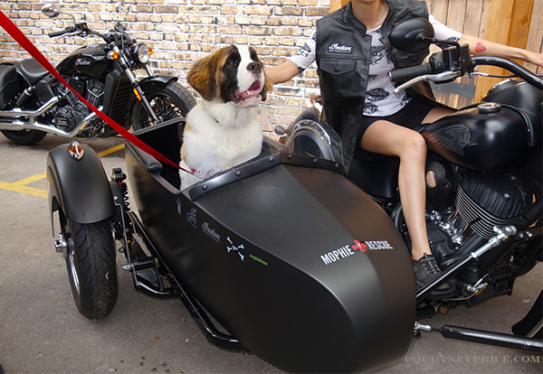 st-bernard-rescue-mophie-rescue, indian-motorcycles, bad to the bone, mophie rescue, puppies, rescue dogs, branding partnerships, marketing, sxsw