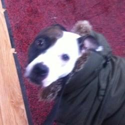 Face du chien avec manteau hiver