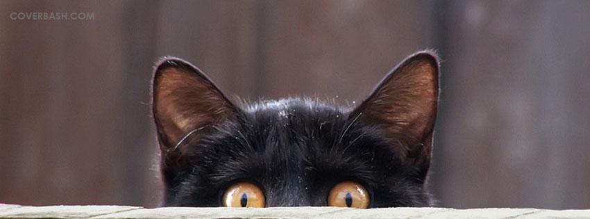 Spring Cat Facebook Covers