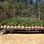 Buy Trees Online