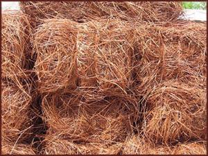 Atlanta Pine Straw