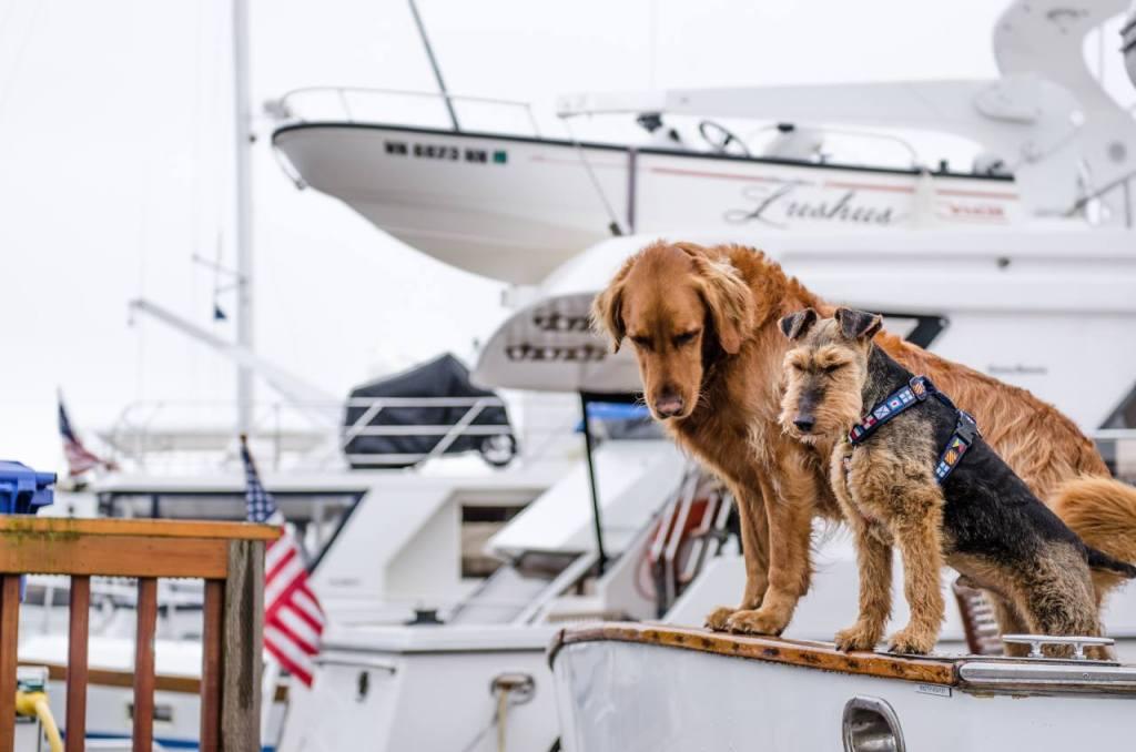 Hundebetreuung: Ein größerer und ein kleinerer Hund sitzen auf einem Boot