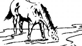 Horse Creek Sale Company-- Castle Rock, CO Douglas County