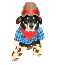 10 Halloween Costumes for Dogs - Cowboy Magic