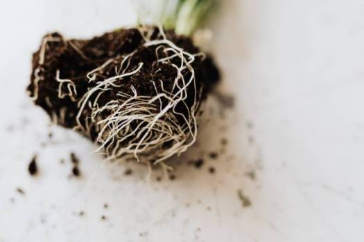Plant Roots helpful tips for growing fruit and vegetables in and around your home