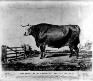 "Photograph print of a lithograph entitled, The American Mammoth Ox, Brother Jonathan. Collection is a photographic print.Series VII.1, Photographs, Box 7.1/2, file ""II. Big Ox [1839],"" USDA History Collection, Special Collections, National Agricultural Library."