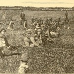 "Picking Cranberries on the Old Colony Co.'s Cranberry Bog at South Yarmouth Mass, from ""The Cranberry,"" published by Bradley Fertilizer Co., Boston, 1892"