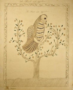 Drawing. The Parrot and Apple Tree, by Sally Hodgdon (1780-1855), 1810. Ink and watercolor on paper. Sally Hodgdon was the daughter of Abner & Sarah (Dame) Hodgdon, a NH Watercolorist, and School teacher in Milton (1804, 1806) and Farmington (1811) New Hampshire.