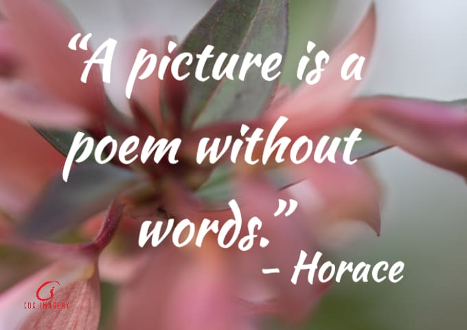Horace Photography Quotes
