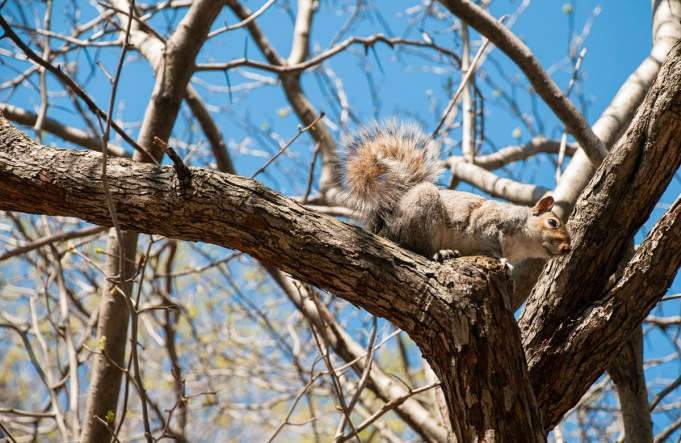 Os esquilos do Central Park nas nas dicas de viagem para Nova York | Cozinha do João