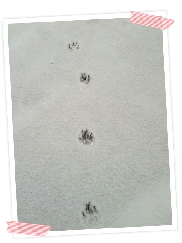 Mit Cooper Spuren im Schnee hinterlassen.