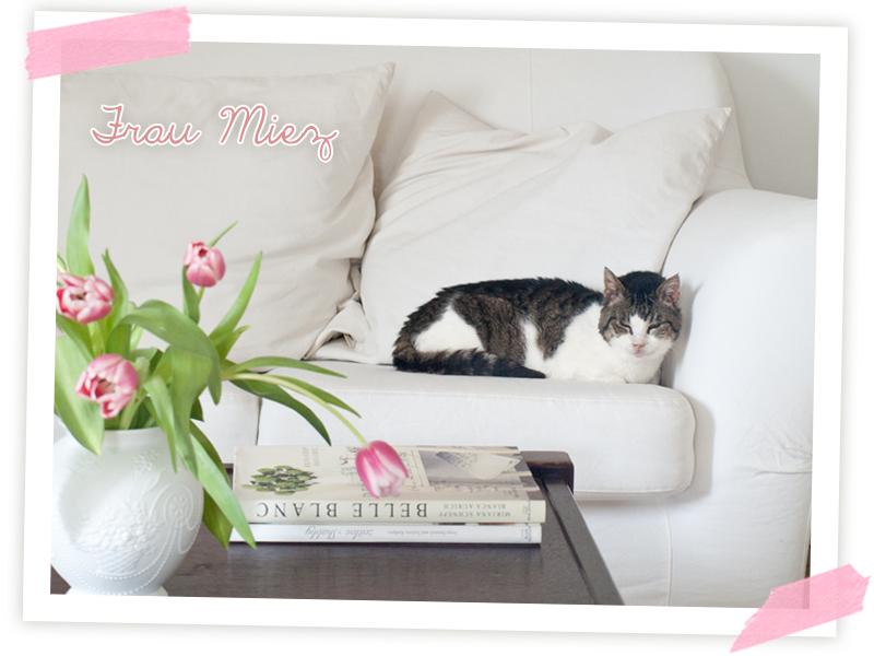 Frau Mietz, unsere Katzendame