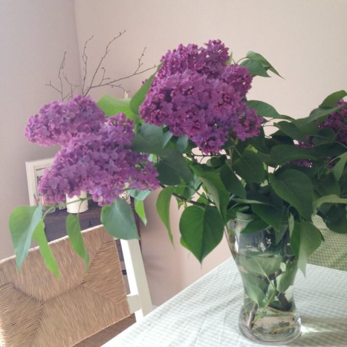 Vom Liebsten gejagte Blumen sind am Schönsten. Erstrecht, wenn es Flieder ist!