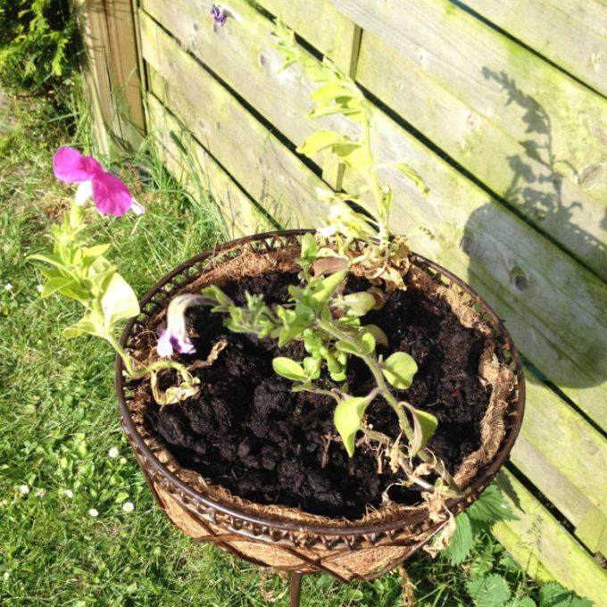 Endlich die schöne ..äh... Pflanzschale am Spieß bepflanzt