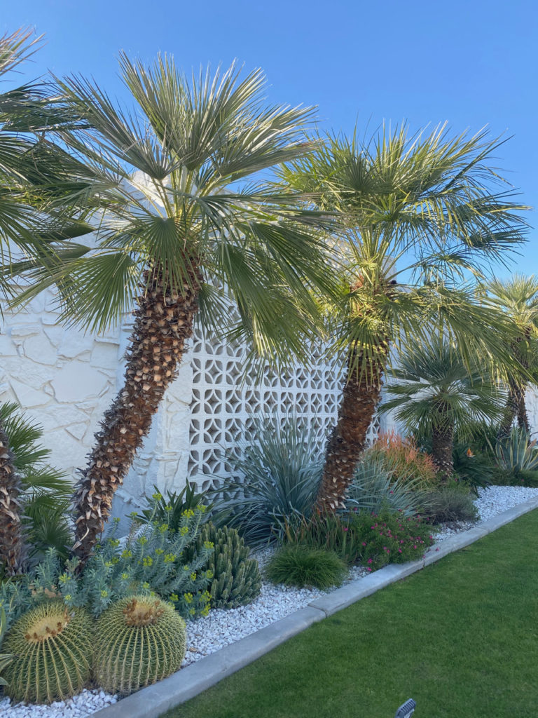 Mid century modern front yard with palm trees and breeze blocks