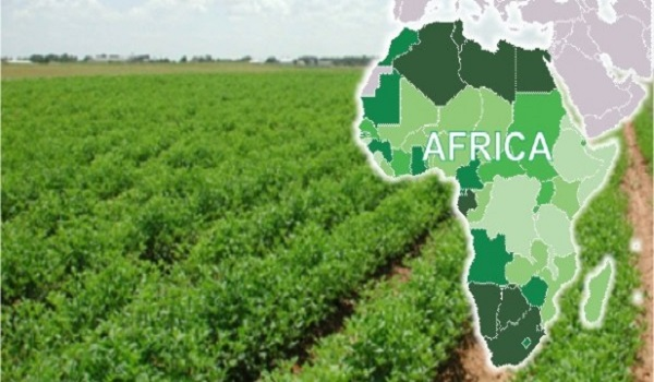 Image result for africa agriculture image