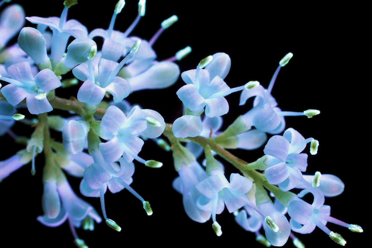 http://i0.wp.com/www.cpburrows.com/wp-content/uploads/2016/03/Sweet-Tiny-Flowers-4-Small.jpg?fit=1280%2C853