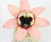 The Best DIY Pet Halloween Costumes - CPC Cares Blog