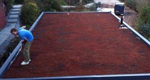 Green/Sedum Roofs