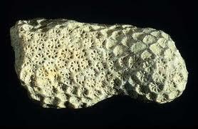 Coral Calcium Powder / Carbonate   CALTRON OVERSEAS LLC ...
