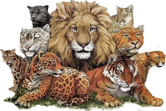 Wild animals (1º Primaria)