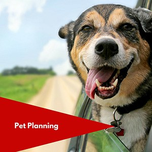 Pet Planning in Your Estate Plan