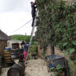 Pruning the pear tree