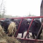 Animals at feeder