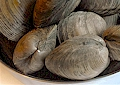 Chesapeake Bay Clams The Crab Place Official Site
