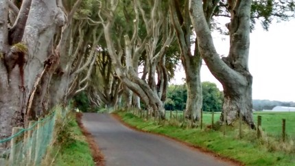 dark-hedges