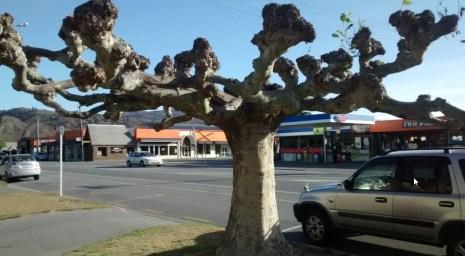 Cracking Retirement Alexandria tree