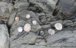 Cracking Retirement Seashells on Crawfordsburn beach