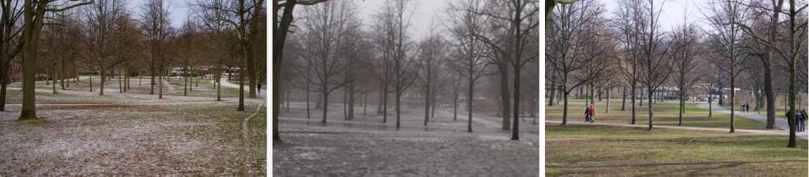park life 1-3 tree Volkspark Friedrichshain Berlin