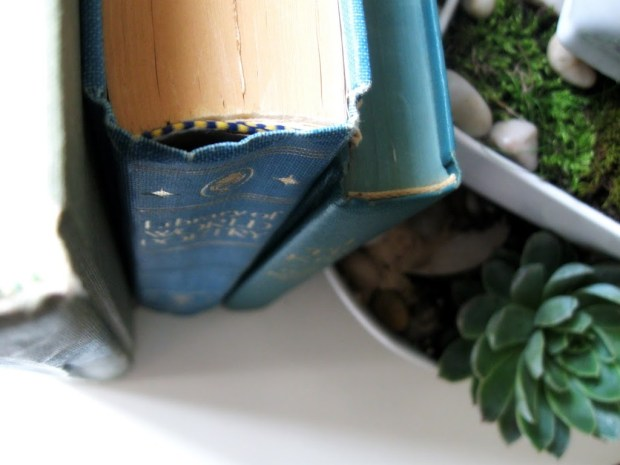 Apartment Home Decor Blue Books with Mint Green Fresh Succulents