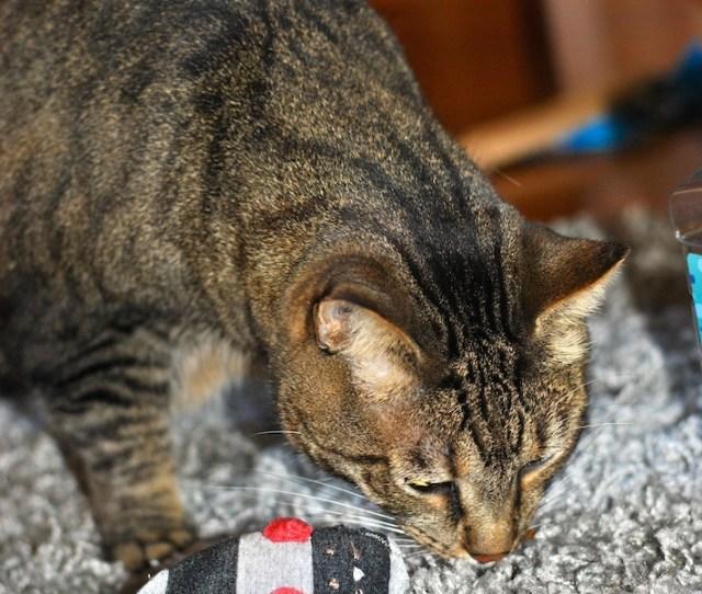 Diy Catnip Mouse Free Cat Toy Pattern Craft Buds