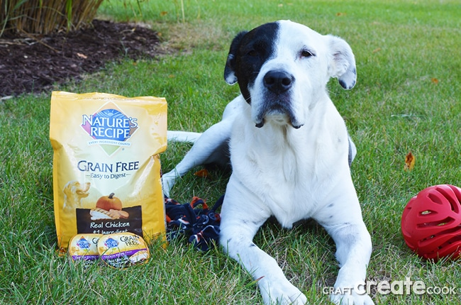 It might be time to consider switching your dog to a healthy grain free dog food diet.