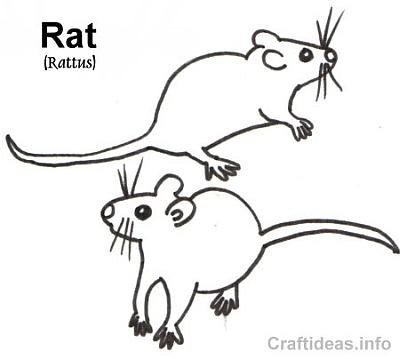 Free Coloring Book Page of a Rat
