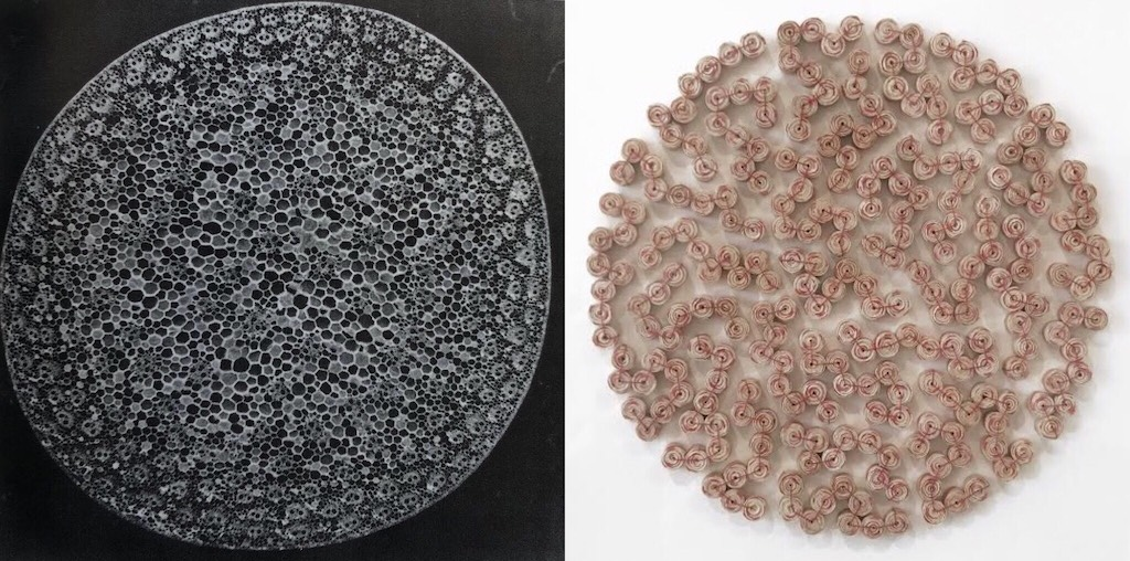 Karyl Sisson Magnifies Microscopic Organisms in her Exhibition at the Craft in America Center