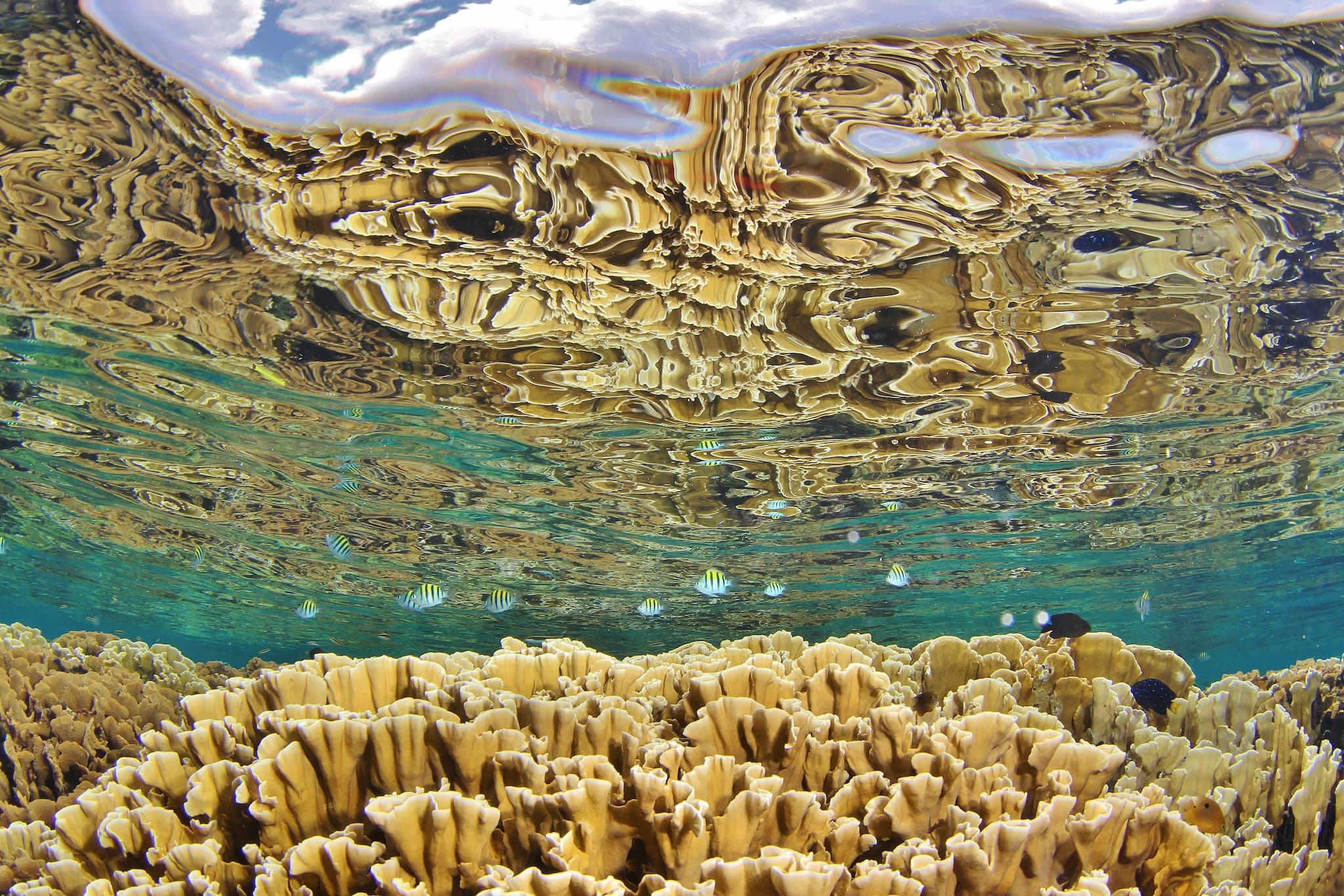 Coral Reef Alliance, Craft in America
