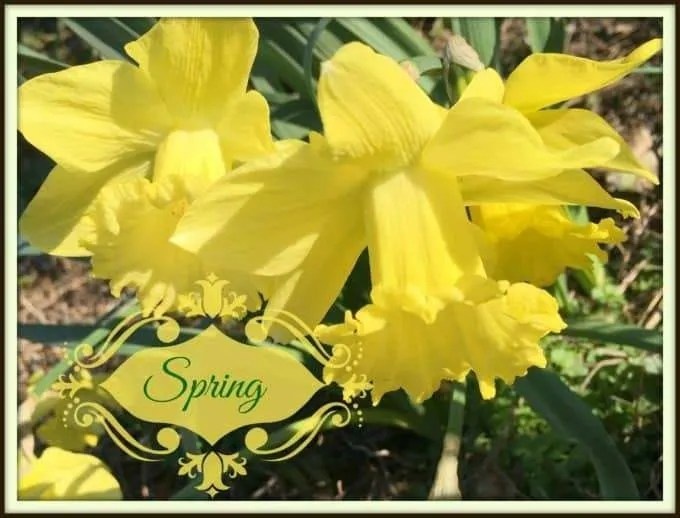 April Potluck Decorations and Food Ideas ~ Fellowship Committee Schedule ~ Easter looking for Spring