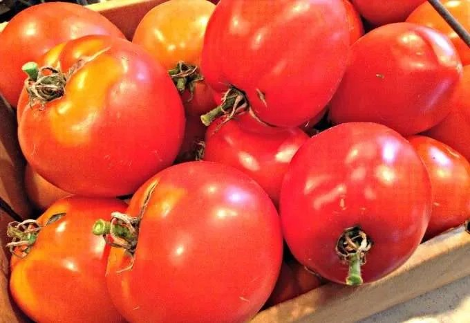 Fresh Garden Tomatoes for Canning