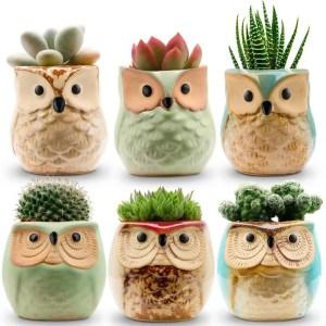 Unique Succulent Pots Plus Planting Supplies 6 owl shaped pots with succulents