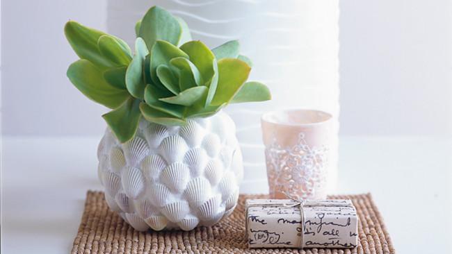 seashells vases