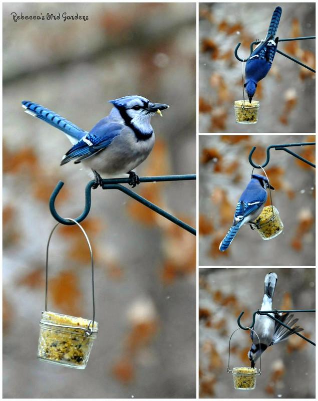blue-jays-bird-feeder-from-jam-bottle-diy-bird-feeders-best-ideas