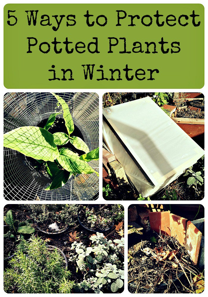 5 Ways to Protect Potted Plants in Winter